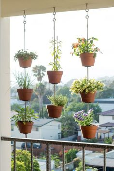 hanging plants for balcony