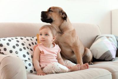 pet friendly furniture ideas