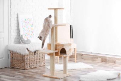 pet corner ideas for home