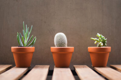 terracota potted plants for indoors