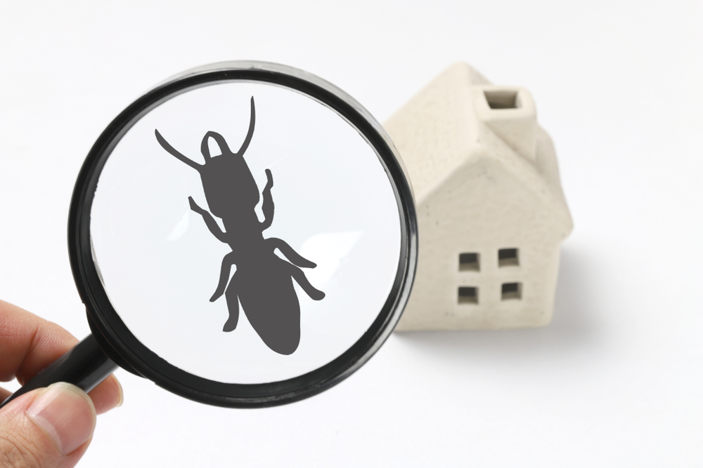 termite free homes