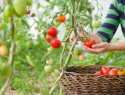 5 easy-to-grow vegetables for your balcony garden