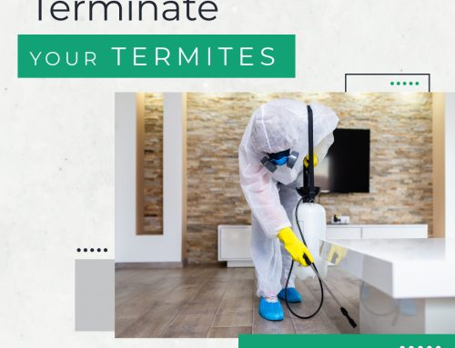How to get rid of termites effectively